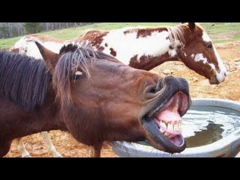 Animals screaming and making funny noises – Funny animal sound compilation PART 2