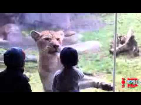 Funny animal videos  Animal Attacks on Humans  Animals attack at the zoo   YouTube