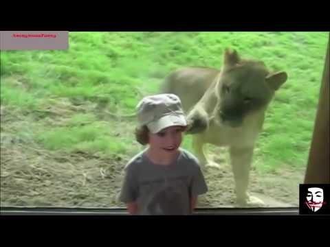 Zoo Animals and KIDS  Funniest Videos   TRY NOT TO LAUGH!(MUST WATCH)