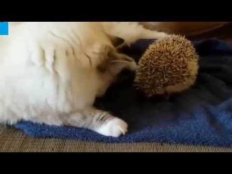 1 Hour of top funny Animals Compilation 2014