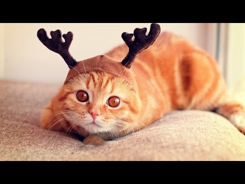 Talented cats – Funny cat Compilation 2017