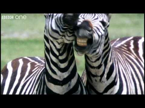 Funny Talking Animals – Walk On The Wild Side – Series 2 Episode 1 preview – BBC One