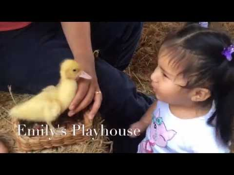 TODDLER WIT CUTE FUNNY  FARM ANIMALS IN  PETTING ZOO – GRANJA EL ARRIERO