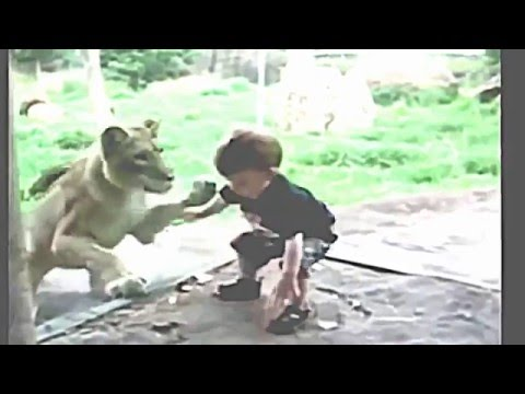 children play with wild animals:funny