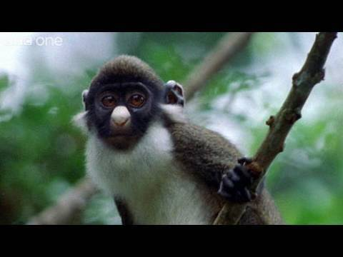 Funny Talking Animals – Walk On The Wild Side – Episode Four Preview – BBC One