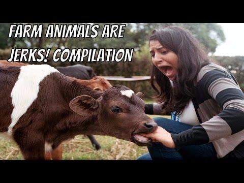 Farm Animals are Jerks