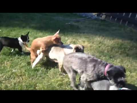 Funniest Animals Gone Wild Humping Compilation | Kyoot Animals .