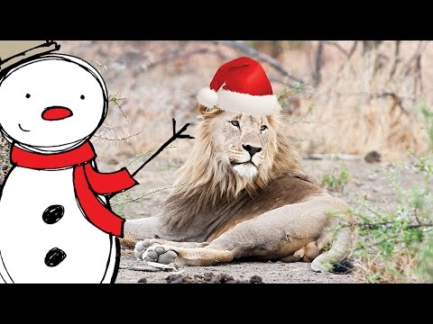 HAPPY HOLIDAYS from Africa – Merry Christmas from these wild animals | Funny wildlife in Santa hats