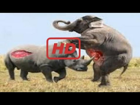 Wild Animal 2017 |  Most Amazing Wild Animal Attacks – Animal Attack Human – Funny Animal Attacks:)