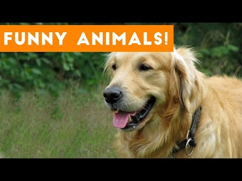 Funniest Pets of the Week Compilation September 2017   Funny Pet Videos