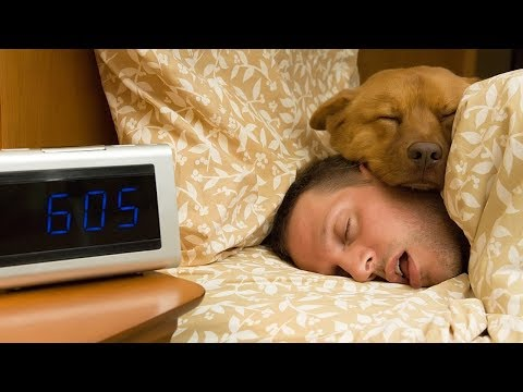 FUNNY Dogs want to sleep with owner    Top Dogs video Compilation