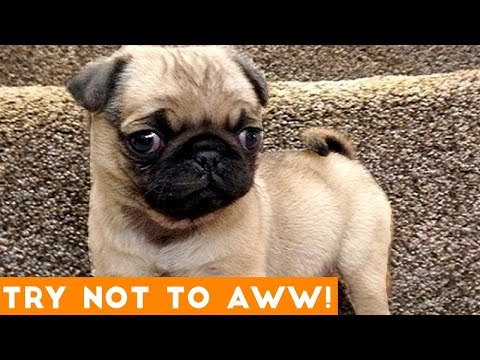 Ultimate Try Not to Aww Compilation May 2018   Funny Pet Videos