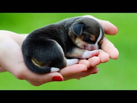 Cute Is Not Enough 🔴 Funny Cats and Dogs Videos Compilation (2018) Perros y Gatos Recopilación
