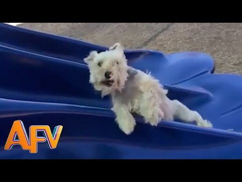 Dogs Who Fail At Being Dogs | Try Not To Laugh! | AFV Funniest Videos 2018