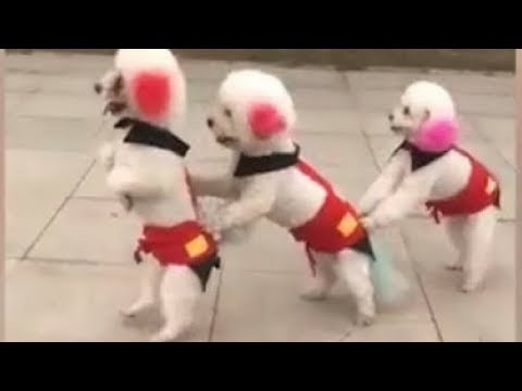 Funny Dogs and Cats Compilation 2018 | Funny dog videos try not to laugh #6