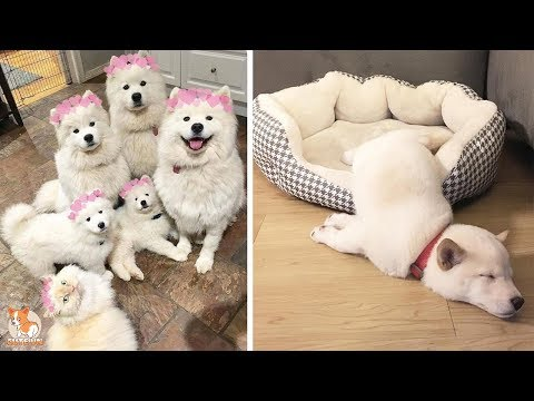 ♥Cute Dogs and Cats Doing Funny Things 2018♥ #106 – CuteVN