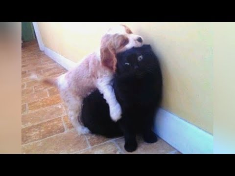 EVIL & MEAN but still EXTREMELY FUNNY DOGS! – Hilarious DOG VIDEOS