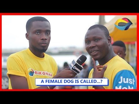 A FEMALE DOG IS CALLED…? | Street Quiz | Funny Videos | Funny African Videos | African Comedy