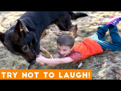 Try Not To Laugh Funniest Animal Compilation November 2018 | Funny Pet Videos