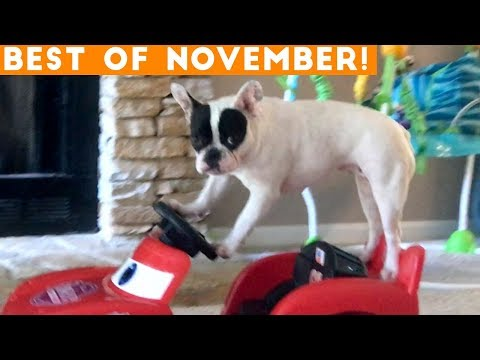 Ultimate Animal Reactions & Bloopers ofNovember 2018 | Funny Pet Videos