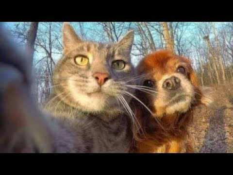 Funny Dogs Videos Try Not To Laugh Clean – Funny Dog And Cat Videos