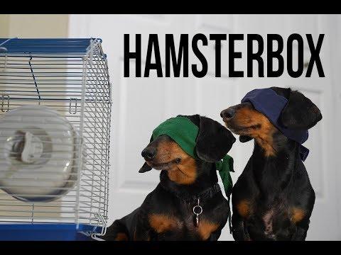 Ep 1. HAMSTER BOX – Funny/Scary Dog Video! (Dog Version of Bird Box!)