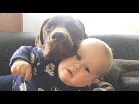 Funny Baby and Dog Fails Moments –  Baby and Dog Videos