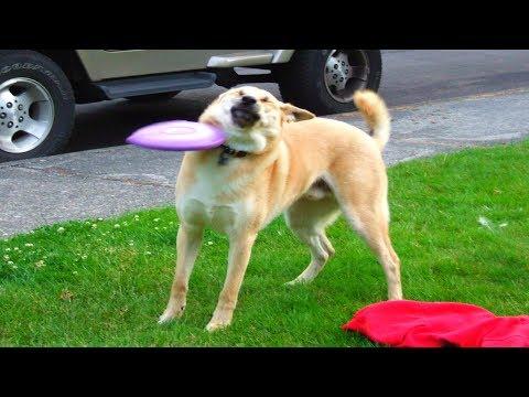 10 Funniest Dog FAILS