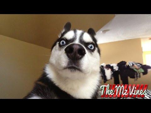 Best Funny Dog Vines 2018   PART 1