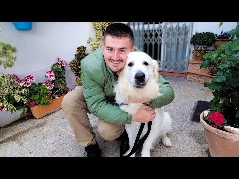 First Little Trip with My Funny Golden Retriever – Cute Dog Reacts to New Places (Spain)