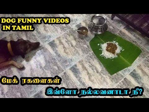 மேக் ரகளைகள் | இவ்ளோ நல்லவனாடா நீ? | Funny Dog Videos in Tamil