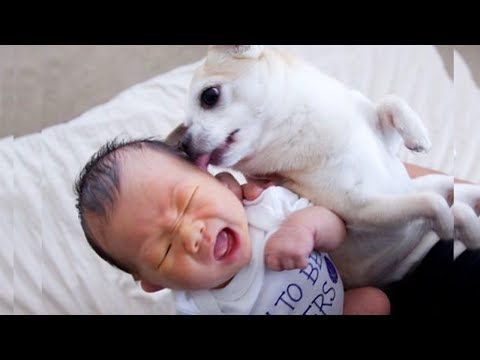 Baby and Dog Fun and Fails 👶🐶 Funny Baby Video
