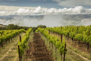 The winemaker and vineyard manager for Bonterra report 2018 has brough excellent conditions in the company's organic vineyards that include Butler Ranch, seen here, located north east of Anderson Valley.