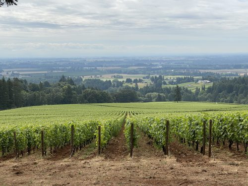 Domaine Drouhin Oregon is located in the Dundee Hills AVA in Oregon's Willamette Valley.