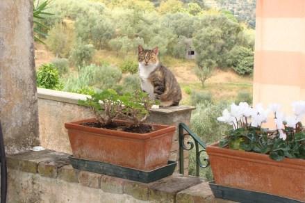 PussPuss. The farmer's favourite cat in Portofino.