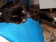 Skitty! Elora's very round, very sweet cat.