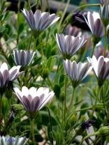 purple flowers label