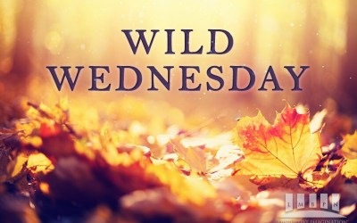 Bewitching Wild Wednesday September 23, 2020