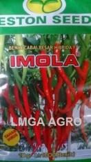CABAI IMOLA