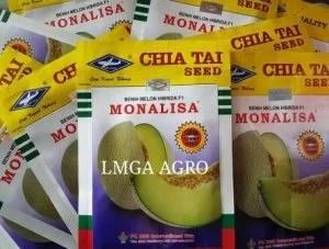 Melon Anti Virus, Cap Kapal Terbang, Harga murah, Melon Monalisa