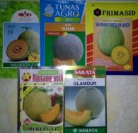 GAMBAR BENIH SEMANGKA DAN MELON, manfaat buah melon, menanam melon, toko pertanian, lmga agro
