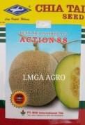 Jual Bibit Melon Action 88 F1-Chia Tai Seed-Cap Kapal Terbang