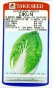 jual benih sawi putih, benih eikun takii seed, menanam sawi putih, lmga agro
