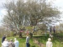 Fairy Tree, Ireland.