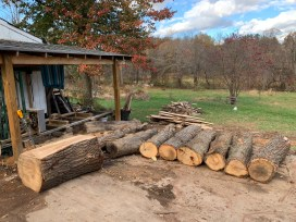 Logs Waiting to be Milled