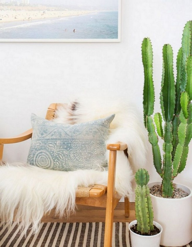 11 Lovely Small Cactus Ideas For Interior Decorations 09