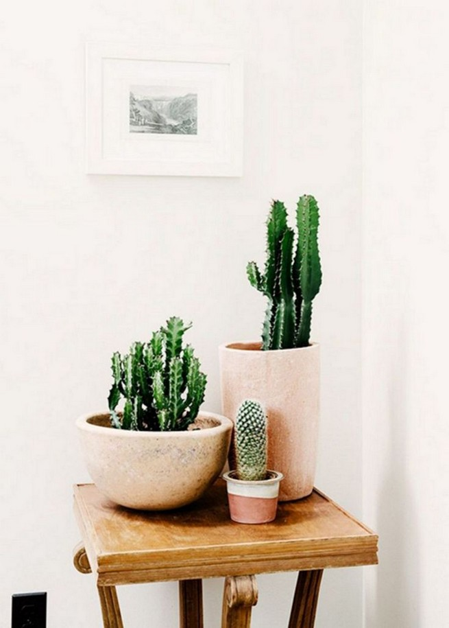 11 Lovely Small Cactus Ideas For Interior Decorations 19