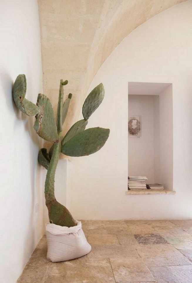 11 Lovely Small Cactus Ideas For Interior Decorations 21