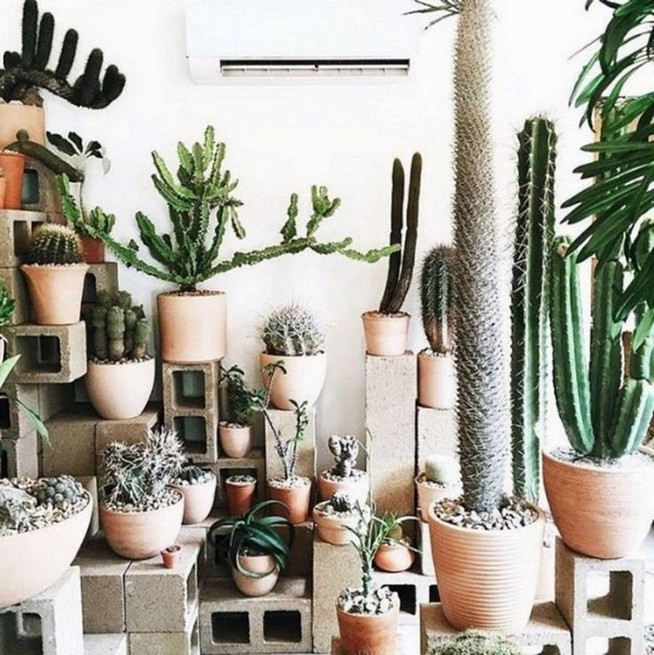 11 Lovely Small Cactus Ideas For Interior Decorations 22