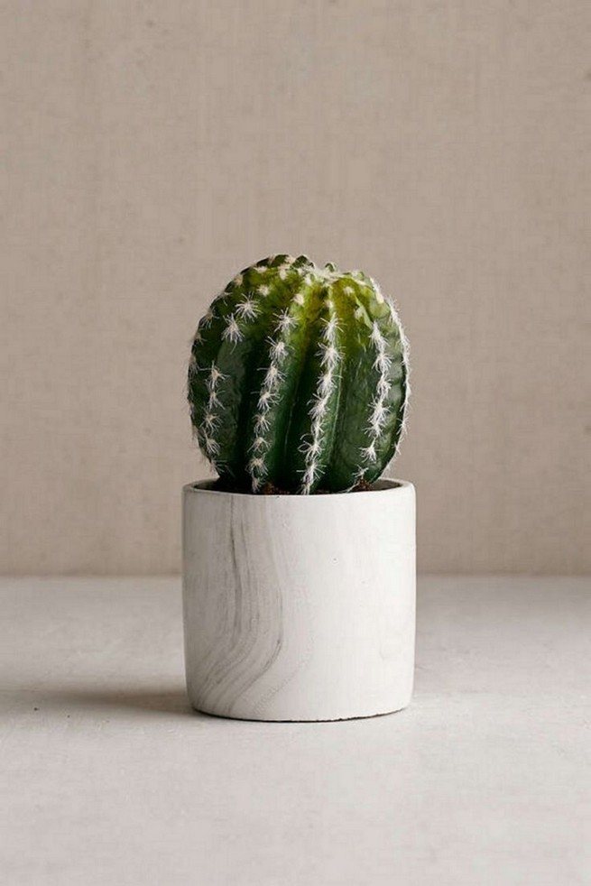 11 Lovely Small Cactus Ideas For Interior Decorations 25